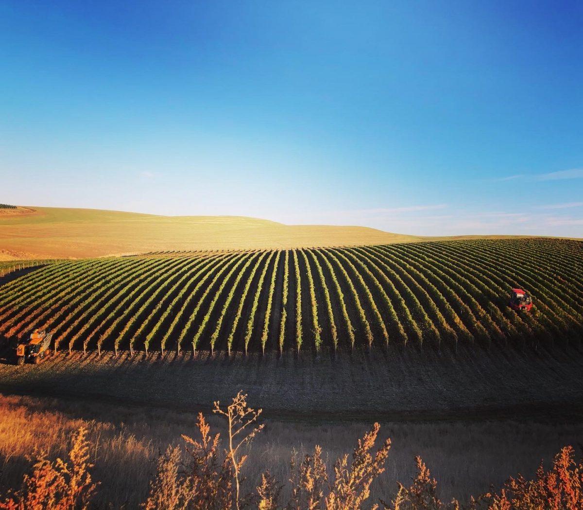 Tractors in vineyards