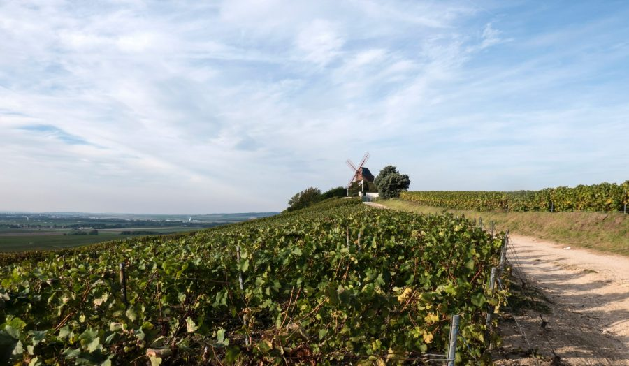 Champagne vineyard with windmill