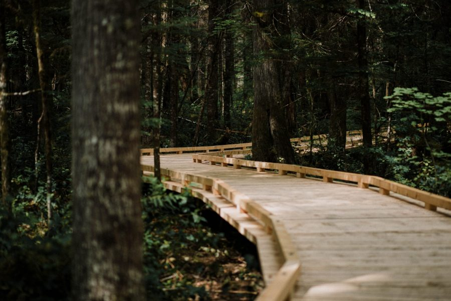Wooden trail in forest
