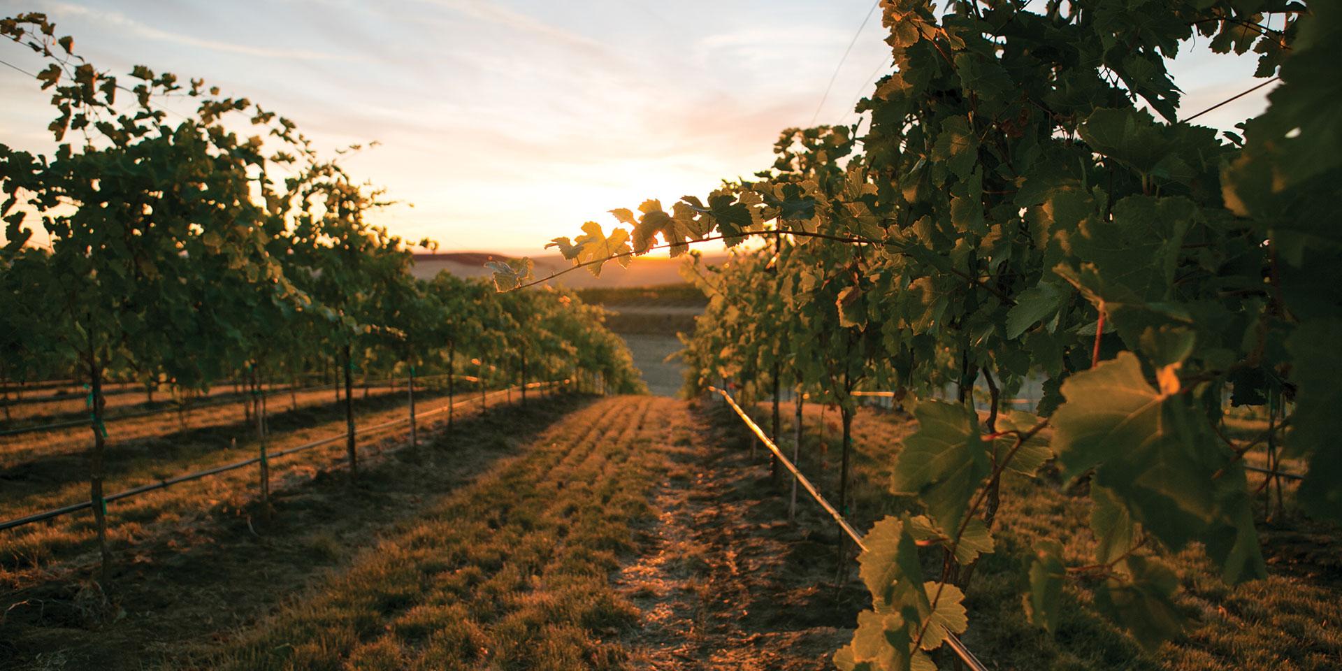 Browne Estate Vineyard