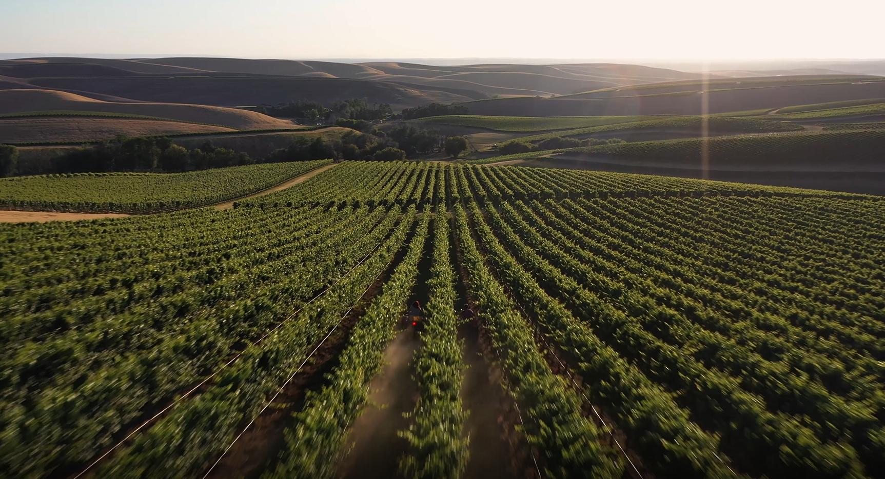 Browne Family estate vineyard aerial shot